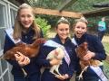 4-Chickens